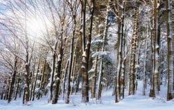 木头在冬天 免版税库存图片