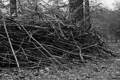 木柴在森林里黑白的夏日 库存图片