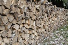木头在森林 免版税库存图片