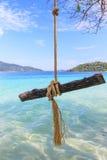 木头从在海上的一棵树垂悬 免版税库存照片