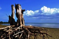 木头在海滩 免版税库存图片