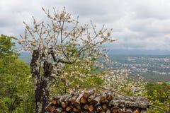 木柴堆在卡斯塔夫老村庄, Istria 库存图片