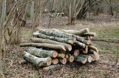 木柴堆在落叶林里 免版税库存照片