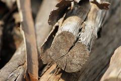木麻黄属的各种常绿乔木树木头似乎无用与残破 库存照片