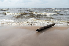 木头日志在风雨如磐的海 库存图片