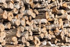 木头注册森林的边缘 库存照片