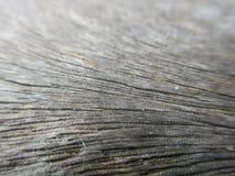 木头的接近的谷物 免版税库存图片