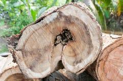 木柴的木材 库存照片