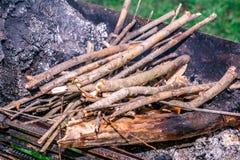 木柴的树在做在自然中的森林里烤肉 库存图片