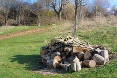 木柴的树在森林野餐时间 免版税库存照片