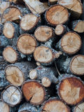 木柴的被堆积的日志 免版税库存照片