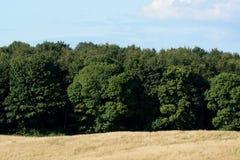 木头的边缘 图库摄影