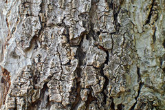 木头艺术 免版税库存图片
