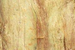 木头细节 库存图片