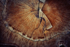 木头裁减纹理圆环 图库摄影