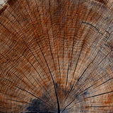 木头裁减纹理圆环 库存照片