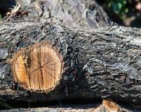 木头裁减纹理 库存照片