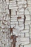 木破裂的纹理 库存照片