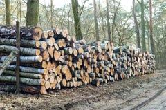 木头记录背景 免版税库存图片