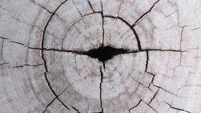 木头详述纹理墙纸和背景 库存照片