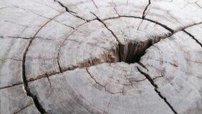 木头详述纹理墙纸和背景 免版税库存照片