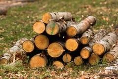 木头采伐纹理/背景 图库摄影
