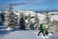 木滑雪的游人有大背包的通过美丽的积雪的森林乘坐 库存图片