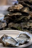 未加工和新鲜的牡蛎 海鲜,上颚的一个纤巧 免版税库存照片