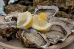 未加工和新鲜的牡蛎 海鲜,上颚的一个纤巧 免版税库存图片