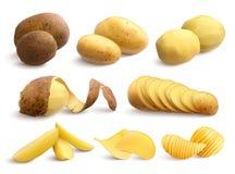 未加工和油煎的土豆现实集合 皇族释放例证