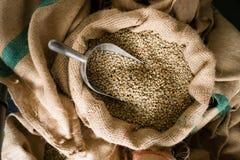 未加工的咖啡豆种子大块粗麻布大袋生产仓库 库存图片