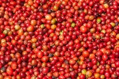 未加工的咖啡豆 图库摄影