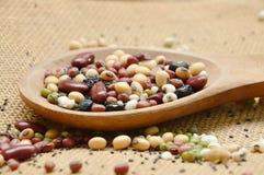 未加工的品种豆和谷物植物木瓢的在大袋背景 库存图片