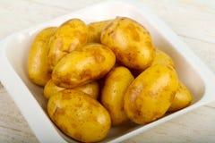 未加工的年轻土豆 库存图片