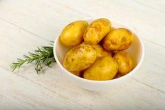 未加工的年轻土豆 库存照片