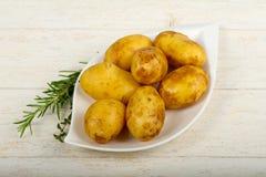 未加工的年轻土豆 免版税库存图片