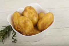 未加工的年轻土豆 免版税库存照片
