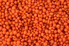 未加工的新鲜的未洗的红色小扁豆豆 库存照片