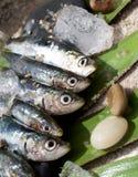 未加工的新鲜的沙丁鱼 免版税图库摄影