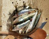 未加工的新鲜的沙丁鱼 库存照片