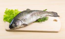 未加工的新鲜的鳟鱼 免版税库存照片