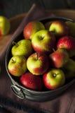 未加工的有机夫人Apples 免版税库存照片