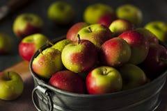 未加工的有机夫人Apples 免版税库存图片