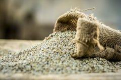未加工的有机狼尾草glaucum,从粗麻布袋子出来的御谷 饥饿的概念 库存照片