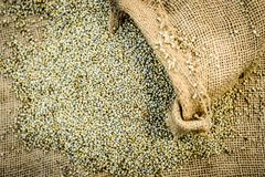 未加工的有机狼尾草glaucum,从粗麻布袋子出来的御谷 饥饿的概念 免版税库存照片