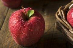 未加工的有机红色美味苹果 免版税库存图片