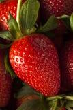 未加工的有机长的词根草莓 免版税库存照片