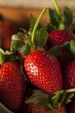 未加工的有机长的词根草莓 库存图片