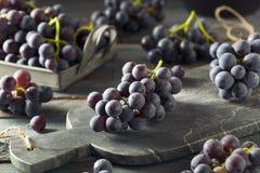 未加工的有机紫色康科德紫葡萄 库存照片