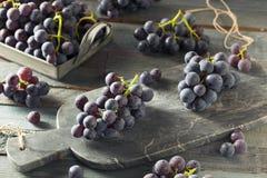 未加工的有机紫色康科德紫葡萄 免版税库存照片